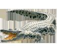 Image Crocodile